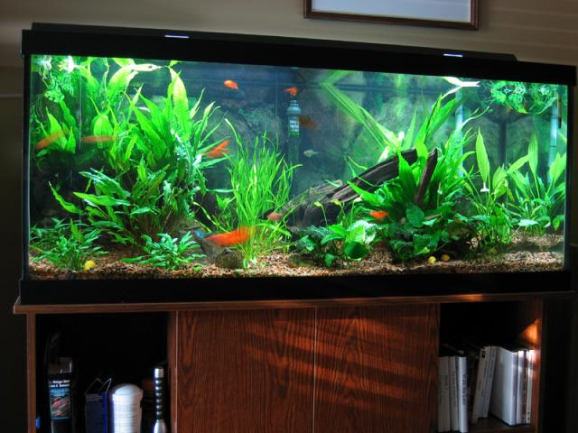 Tropical Fish Tank Decoration Ideas