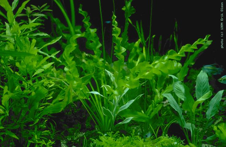 What Are Some Underwater Plants