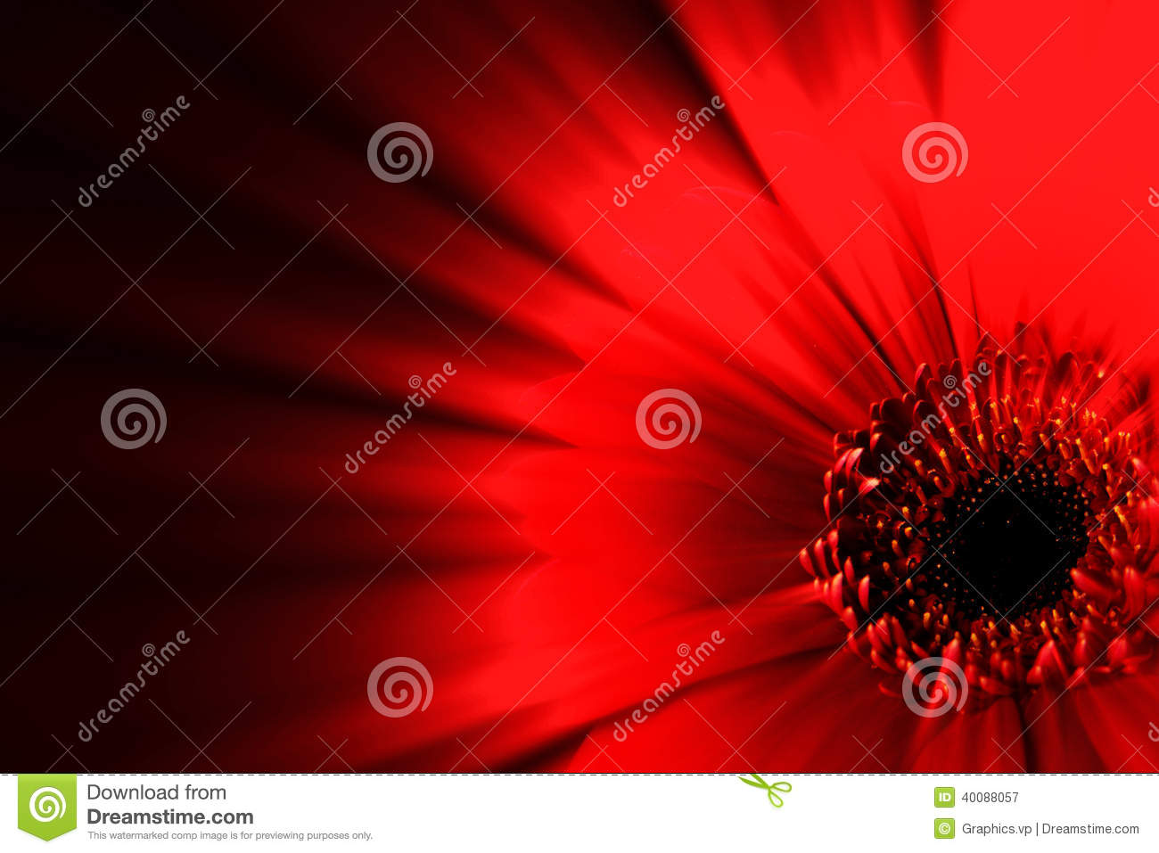 Red Flower Abstract