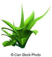 Water Plants Clip Art