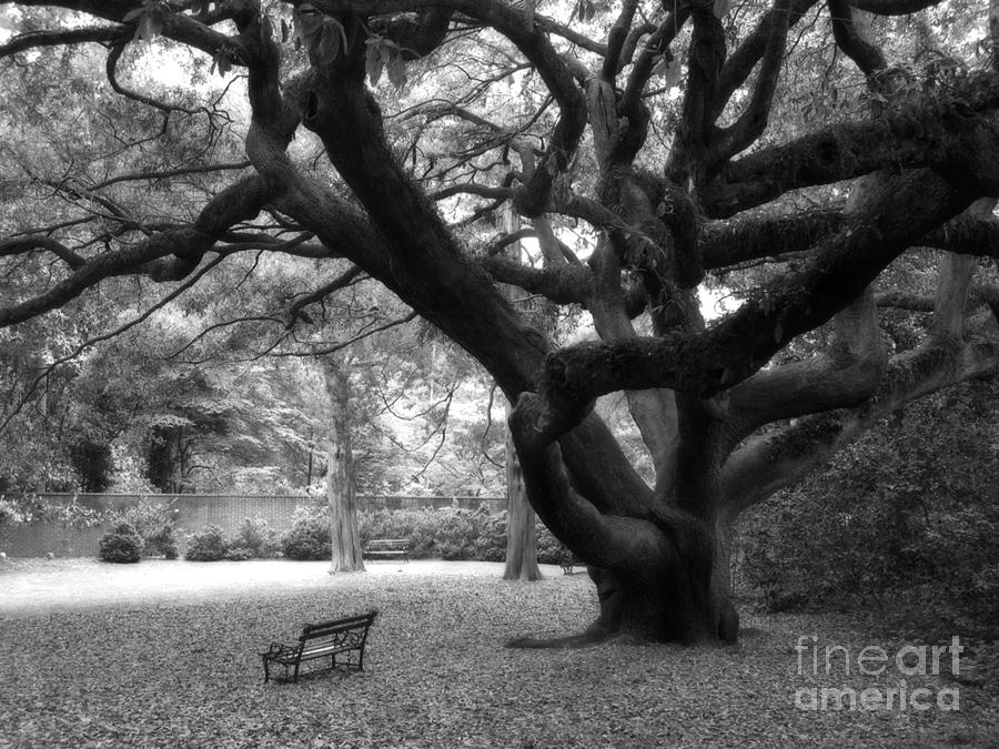 Angel Oak Tree Black and White