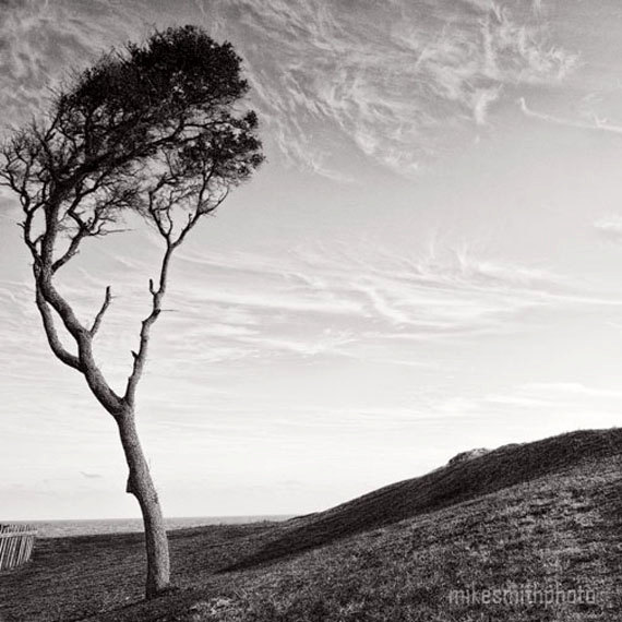 15 Oak Tree Black And White Landscape Photography Images