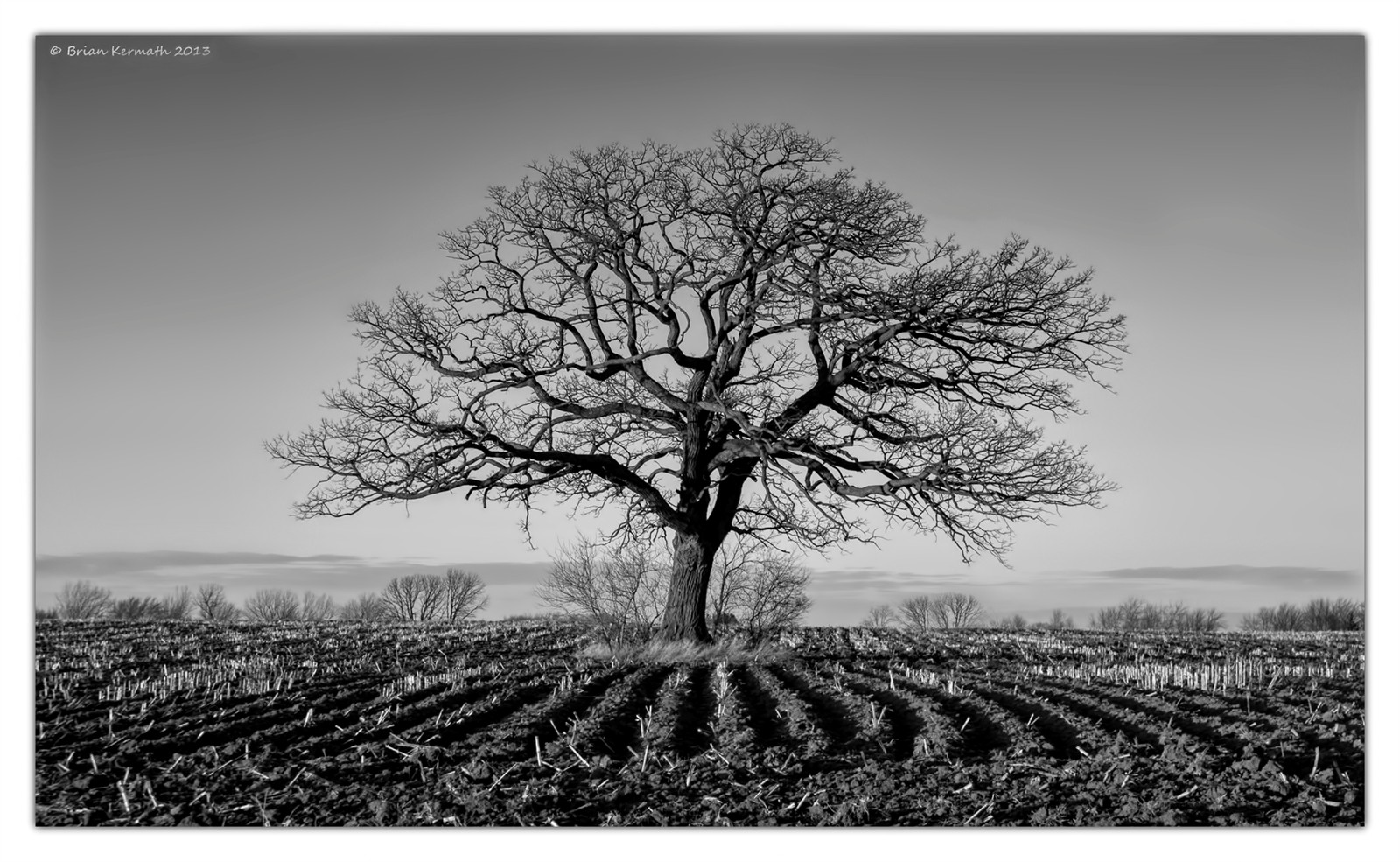 Black and White Oak Tree