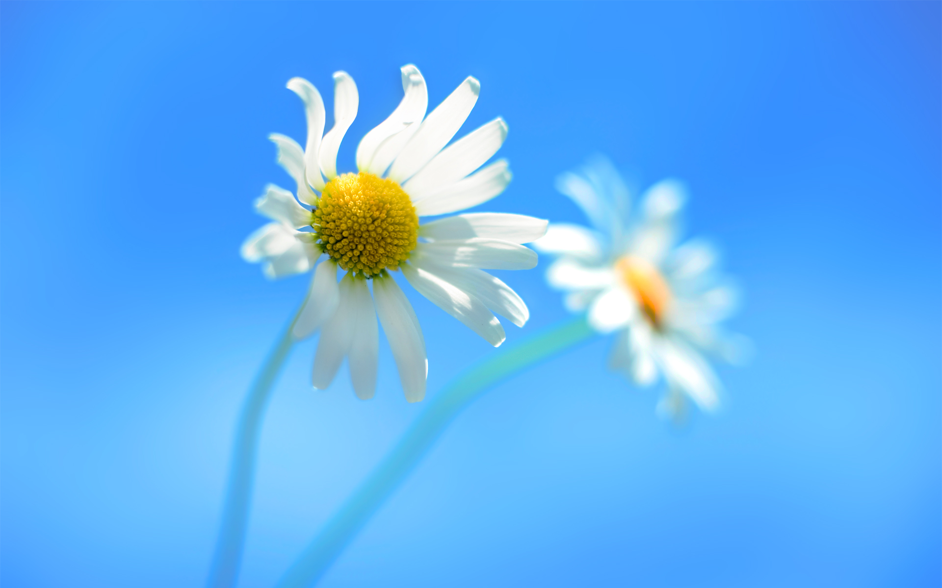 8 Flower Desktop Icon Windows 8 Images