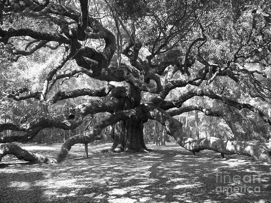 Oak Tree Drawing Black and White