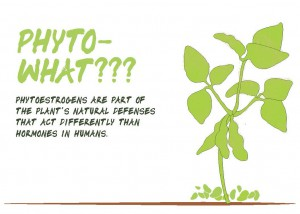 Soy Phytoestrogen Men