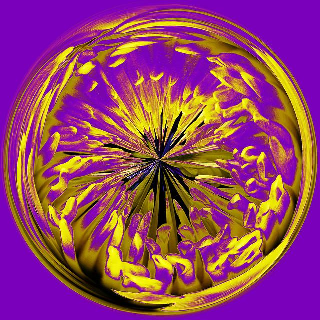 Yellow Circle Flower