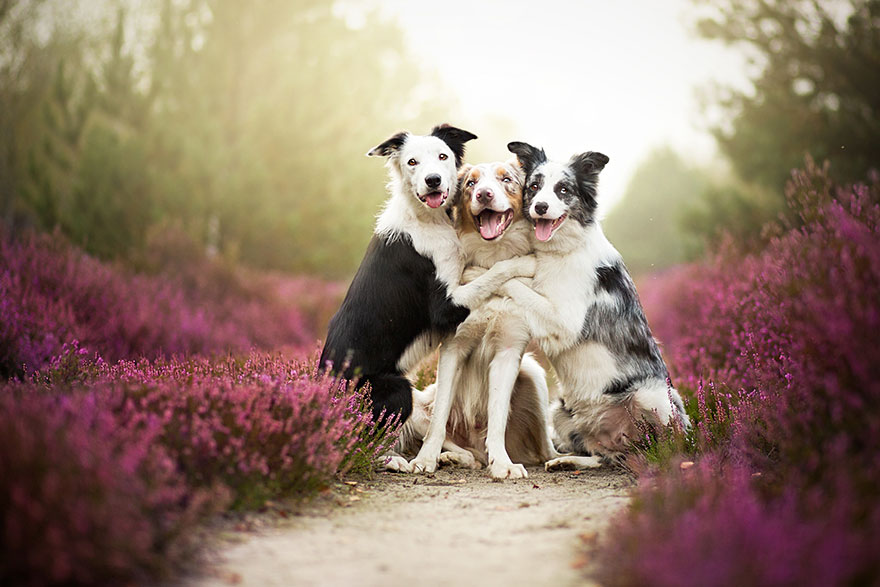 Beautiful Dog Photography