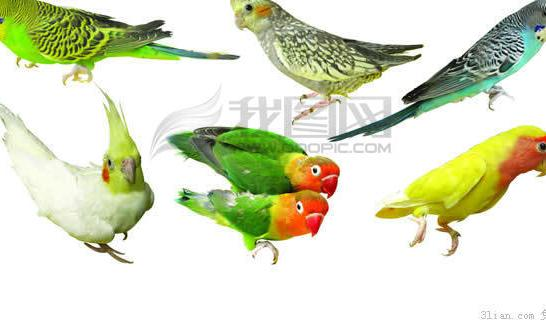 Bird PSD File Free