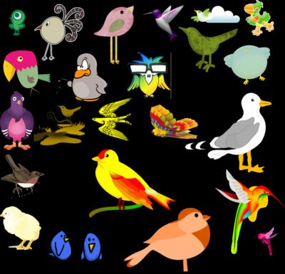 Bird PSD