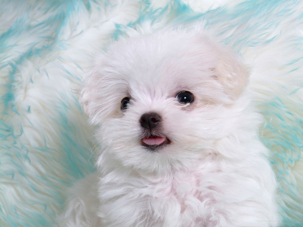 Cute Baby Animals Puppies