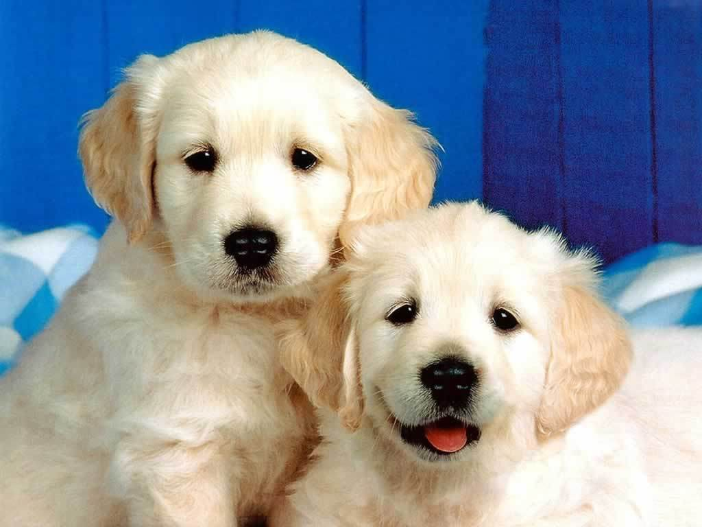 Cute Dogs and Puppies