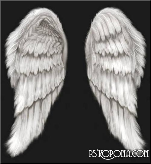 12 Angel Wings PSD Template Images