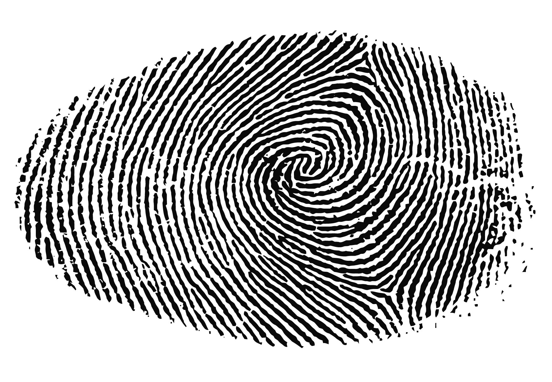 13 Fingerprint Vector Art Images