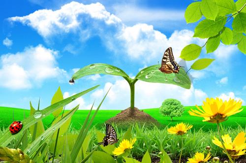 Flowers Butterflies Meadow