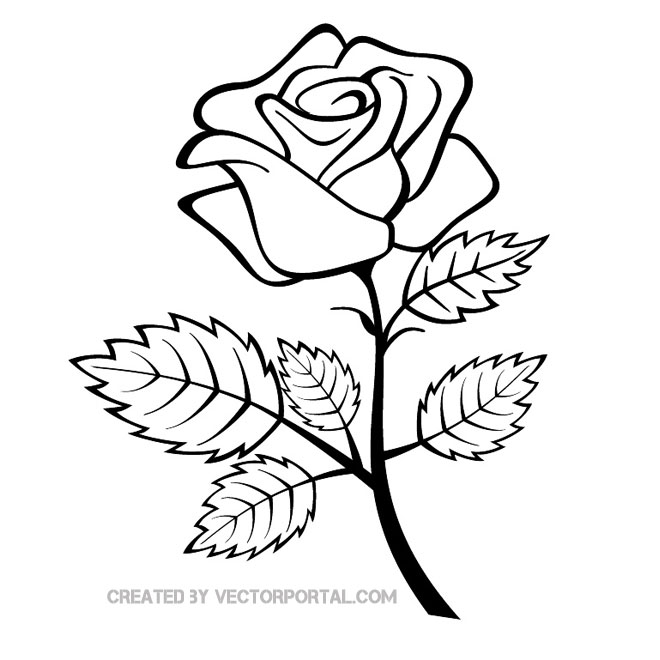 16 Rose Outline Vector Images