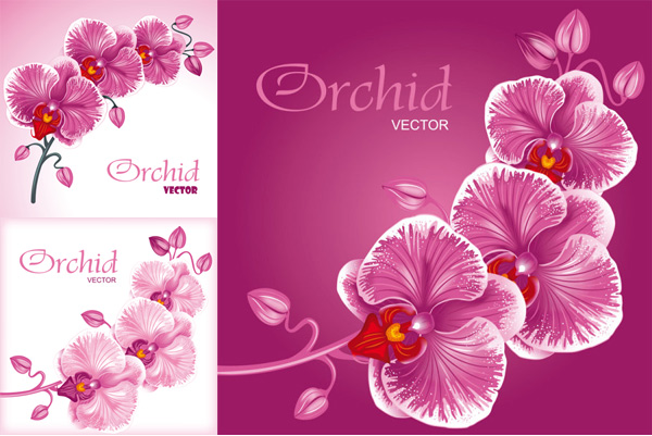 Orchid Flower Vector Download