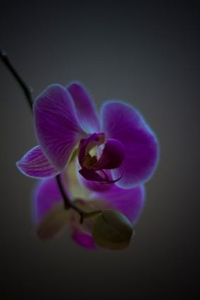 Orchid Public-Domain Images Free