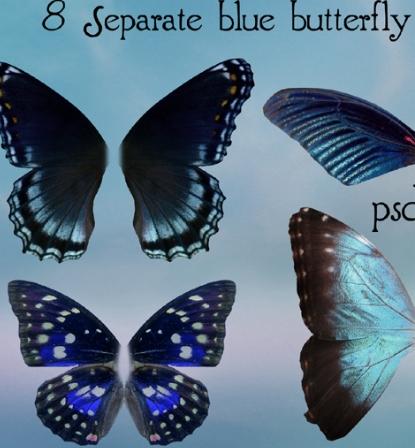 Butterfly Wing PSD