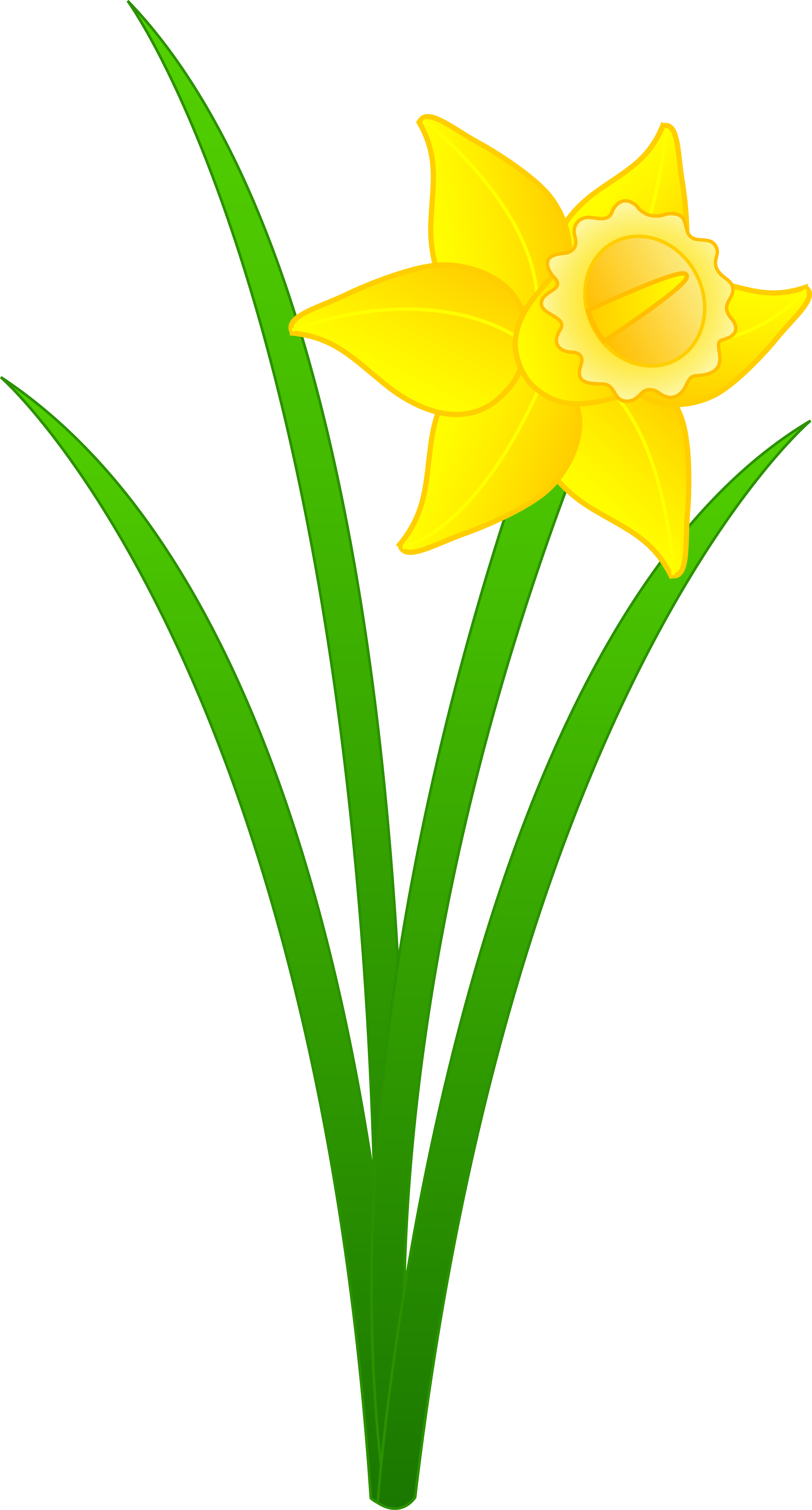 Cartoon Daffodil Clip Art