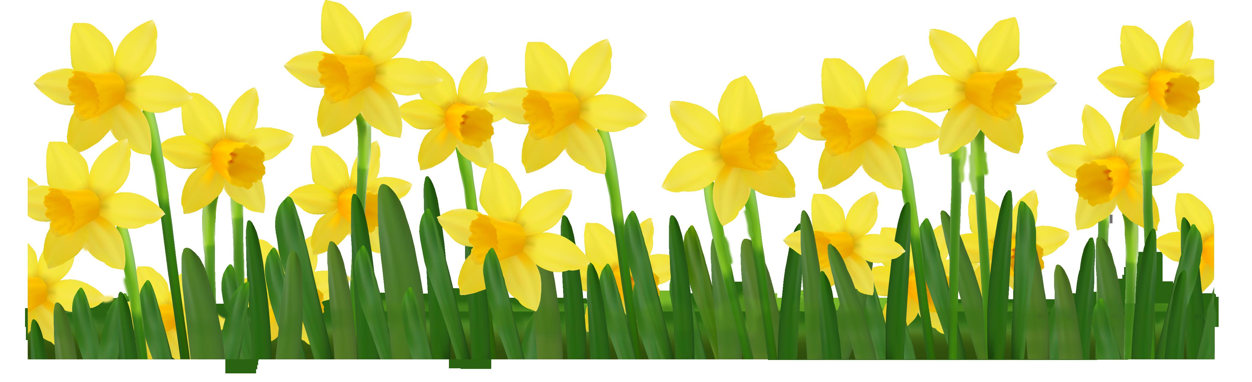 Daffodil March Flower Clip Art Free