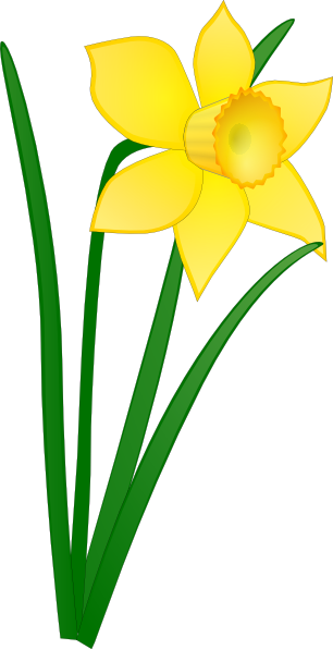 13 Daffodil Free Graphics Images