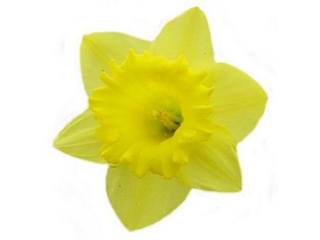 Free Clip Art Daffodils Flower