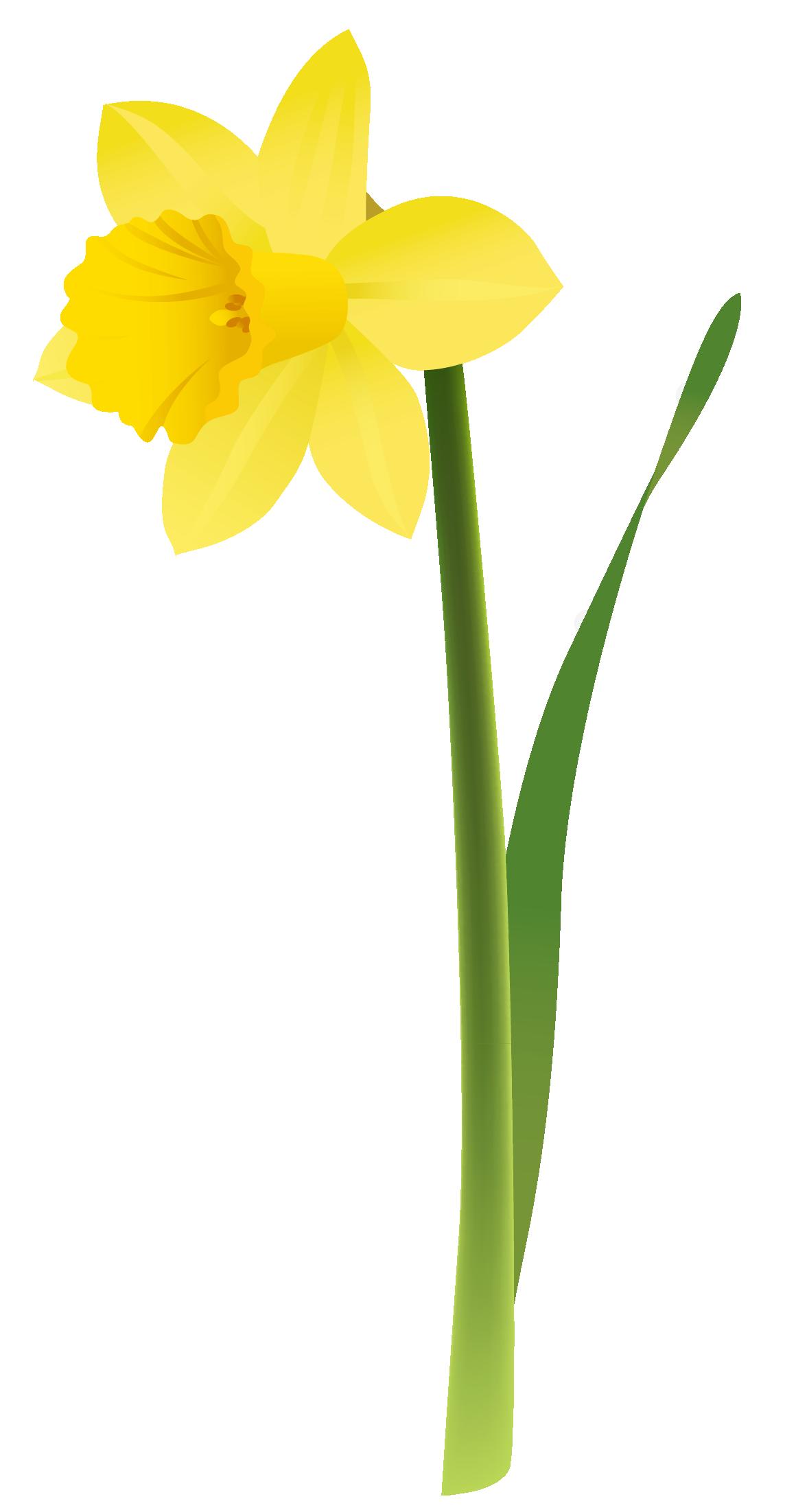 Free Clip Art Spring Daffodils