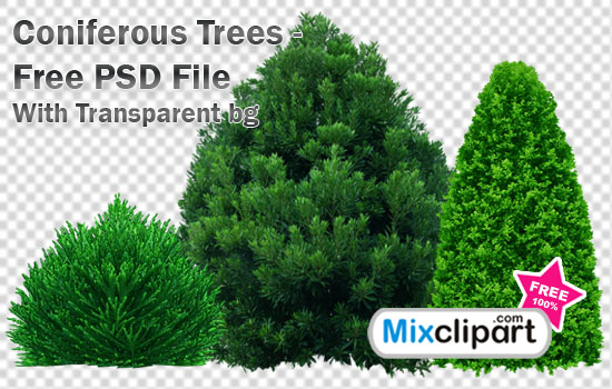 8 PSD Tree Free Download Images
