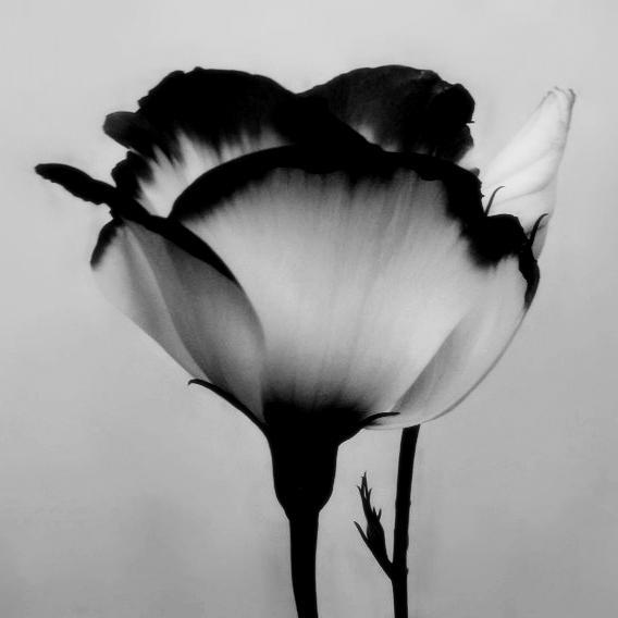 7 Black And White Photography Flowers Images