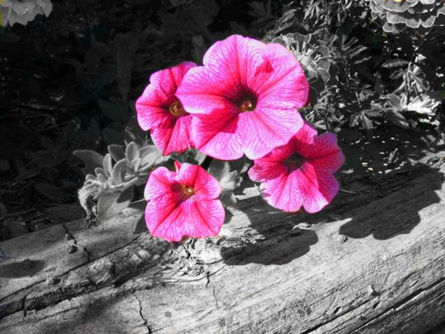 10 Color Splash Photography Images