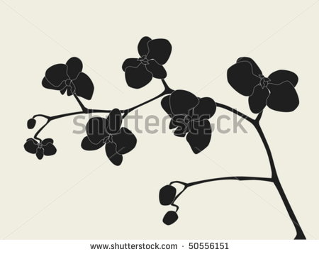 14 Vector Japanese Orchid Images