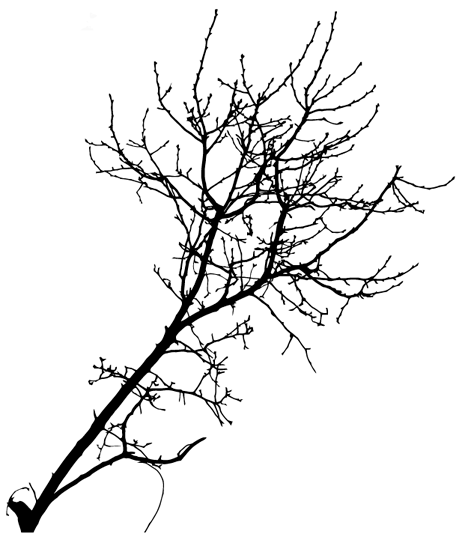 19 Tree Branch Silhouettes Vector Free Images