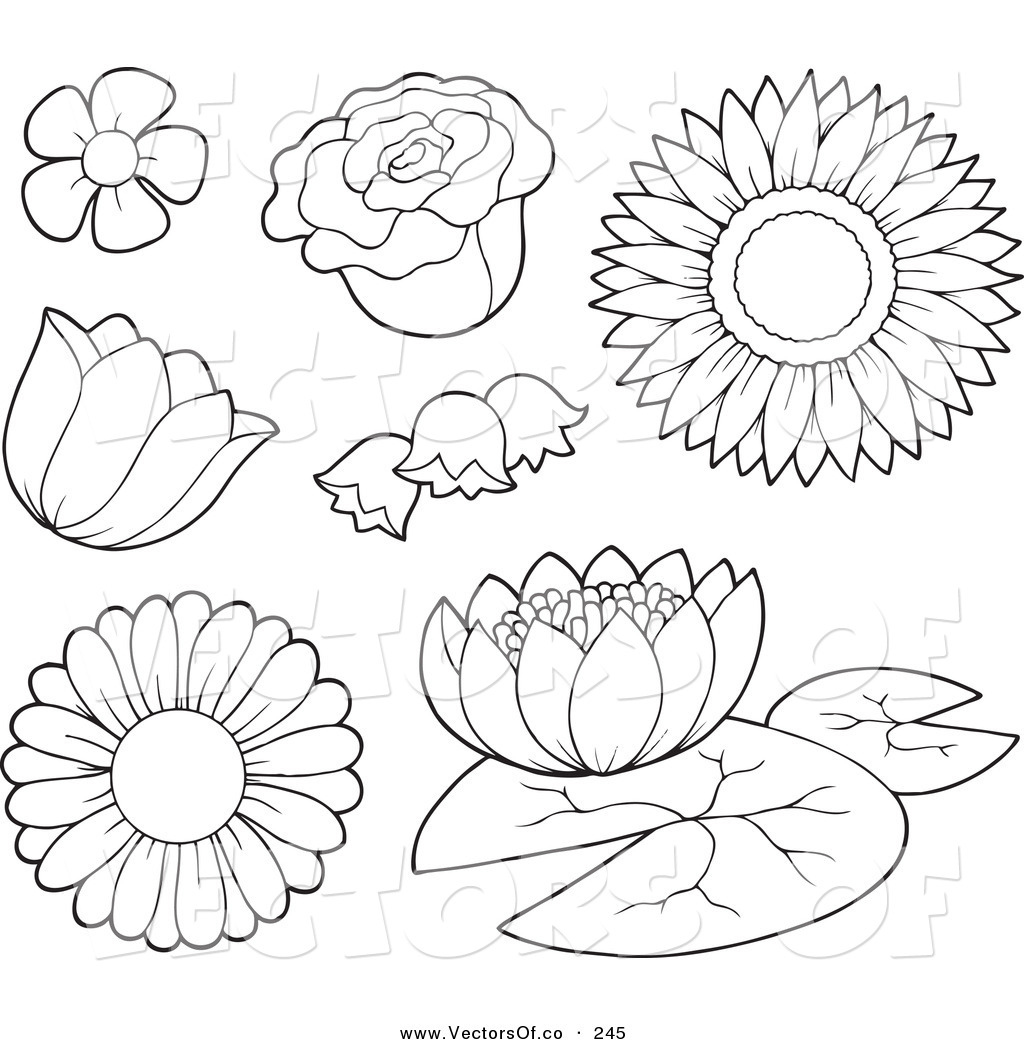 19 outline flower vector images lily flower drawing for Flower outline coloring page
