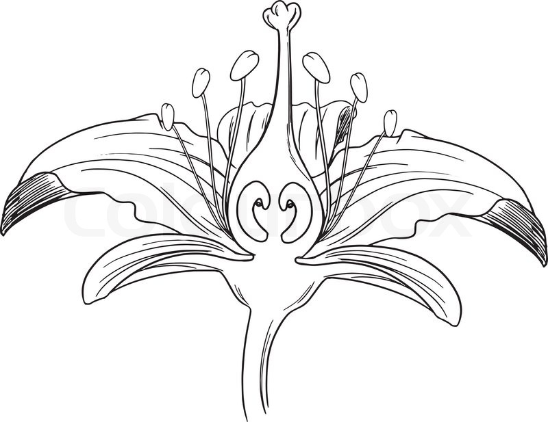 19 outline flower vector images