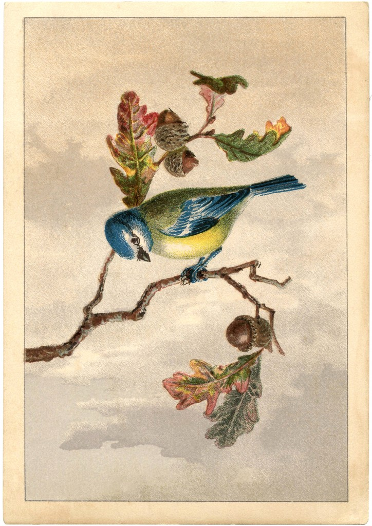 Vintage Bird Clip Art Free