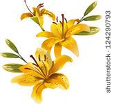 10 Pulitzer Flower PSD Images