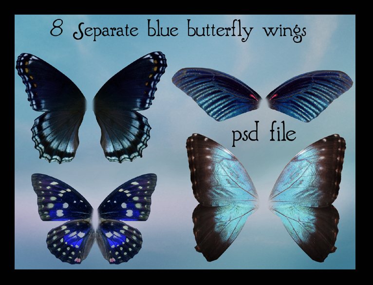 Blue Butterflies Wings Pictures