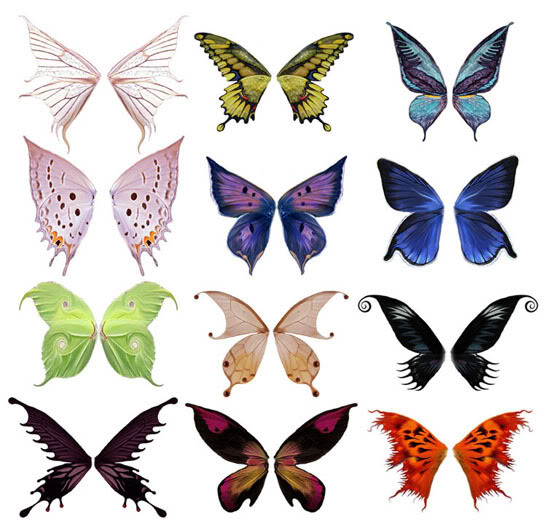 12 Butterfly Wings PSD Images