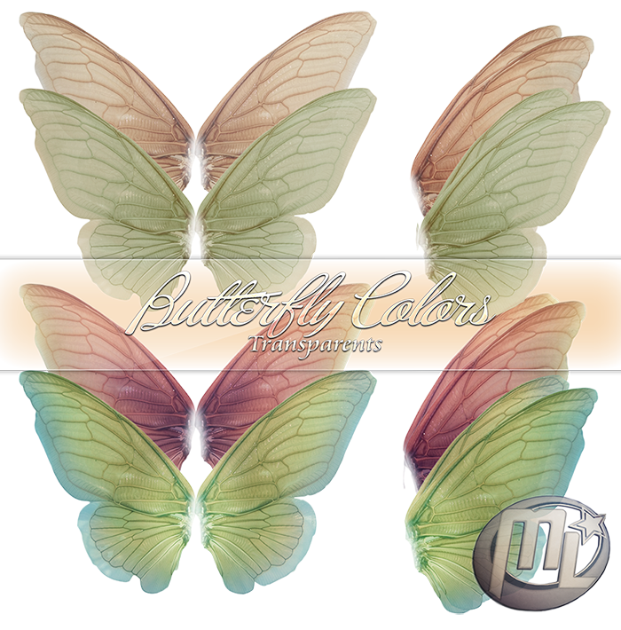 Butterfly Wing Color