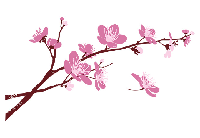 13 Cherry Blossom Branch Photography Images