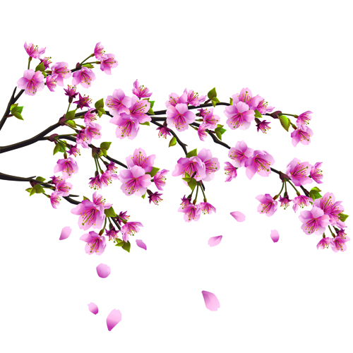 17 Japanese Cherry Blossoms Vector Black Images