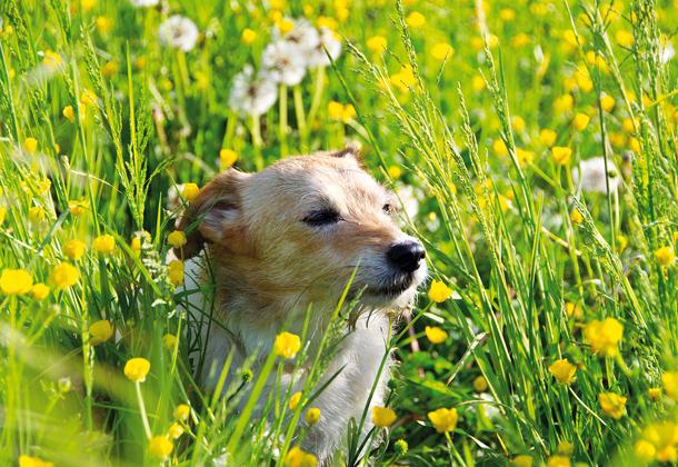13 Pet Photography Websites Images