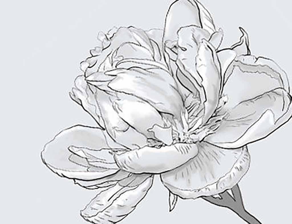 Amazing Flower Designs Drawings