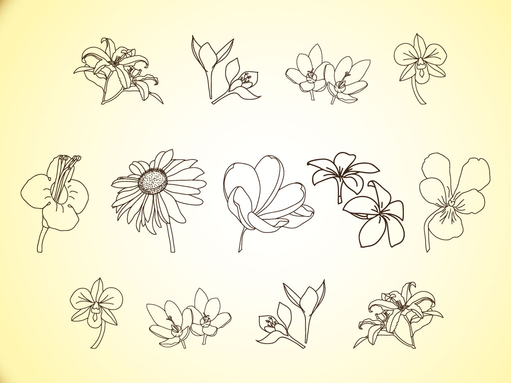 Flower Line Illustration