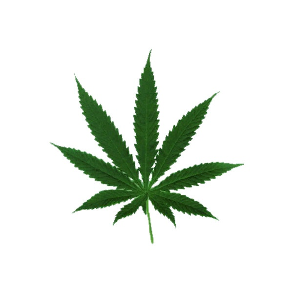 Marijuana Leaf PSD