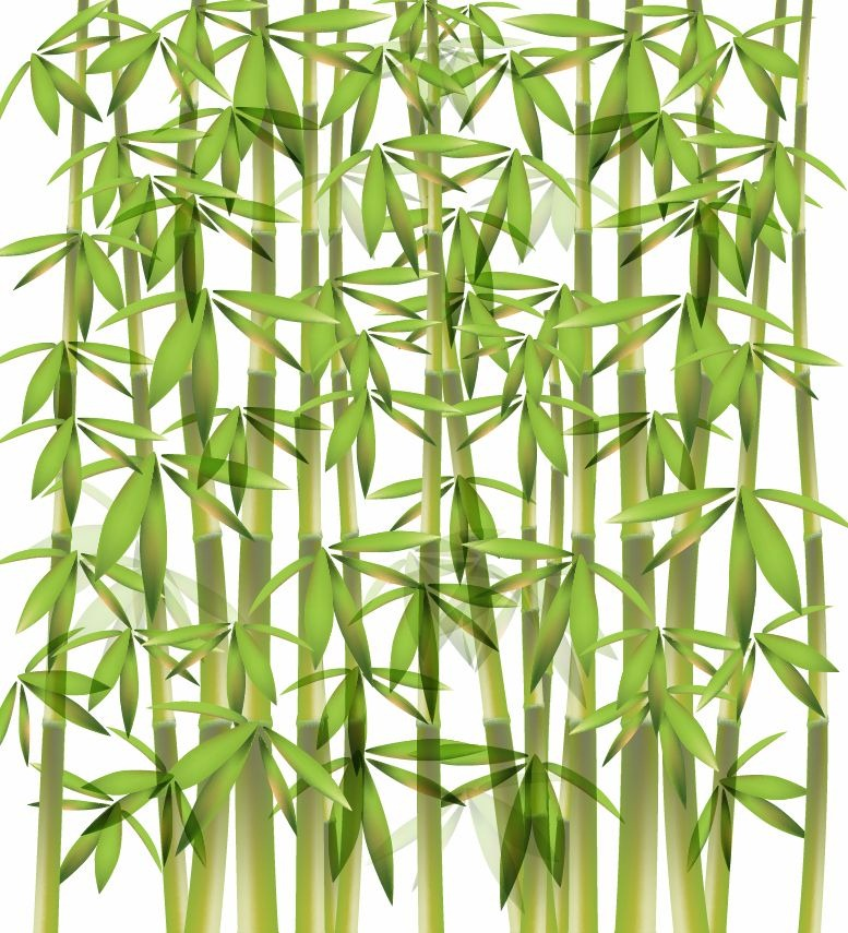 18 Bamboo Vector Design Images