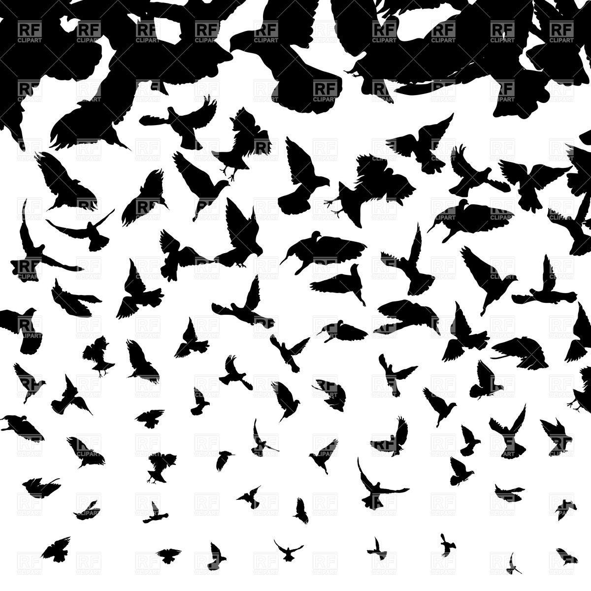 10 Bird Vector Free Download Images