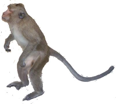 Monkey PSD