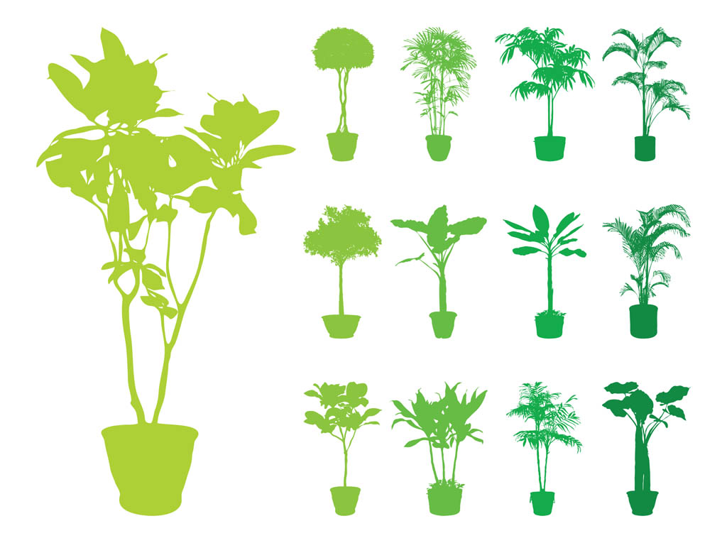 12 Vector House Plant Images